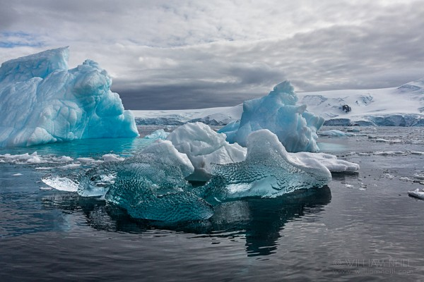 Blue Icebergs, Cierva Cove, Antarctic Peninsula, Antarctica January 29th, 2014 09:42:19