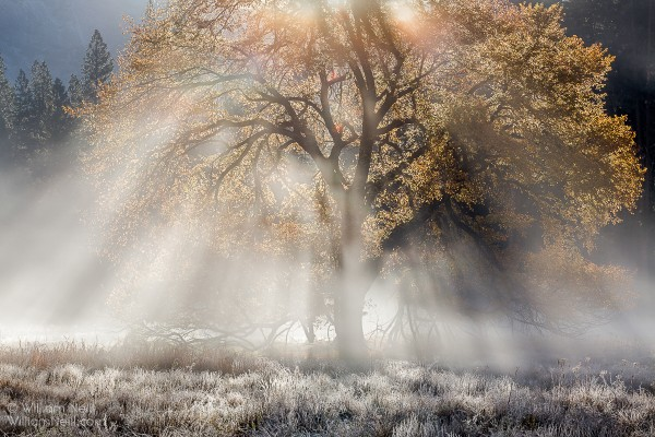 Autumn Elm and Sunbeams, Cook's Meadow, Yosemite National Park, California, 2014